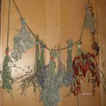 herbs drying gfzing.com