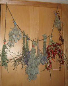 herbs drying gfzing.com
